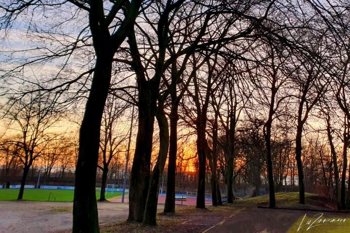 bäume-sportplatz-sonnenuntergang