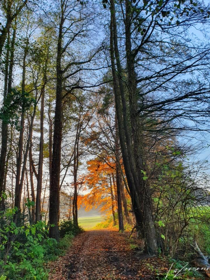 baueme_wise im nebel- herbstbaum